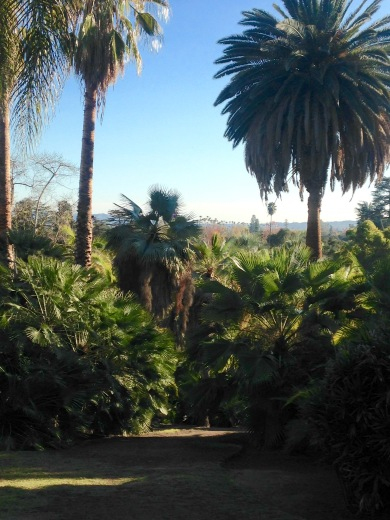 View over the Palm Gardens at the Huntington